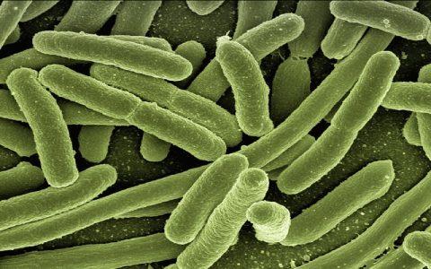 Bakterije oko nas