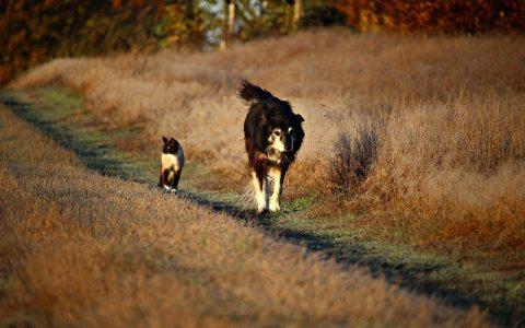 Mačke štite od zla, a psi čuvaju zdravlje