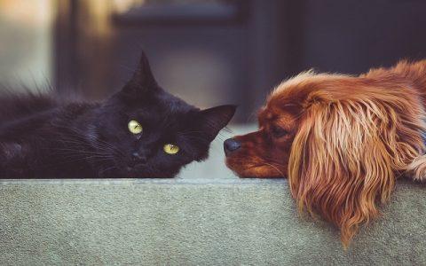 Znate li koliko vaš pas ili mačka imaju godina?