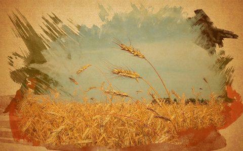 Graham kruh je najhranjivija vrsta pšeničnog kruha, zato što je u njemu sve ono što je i u samom zrnu pšenice, i u kvalitativnom i u kvantitativnom odnosu, kakav je sama priroda uspostavila.