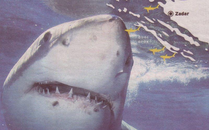Kvarner je najopasniji za kupanje. Velika bijela psina napala je i ubila čak dva puta u opatijskom akvatoriju, no viđena je duž cijele Jadranske obale.