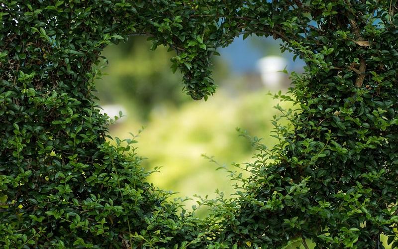 Ljubav bez granica povezuje sve čisto