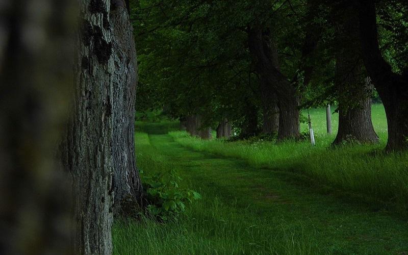 Slike za dobro jutro - drvo lipa