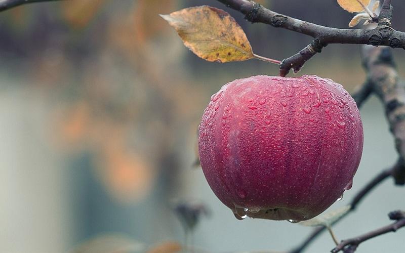 Godišnja doba i jesen - Jesensko voće