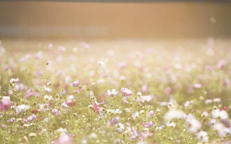 Fotografije cvijeća