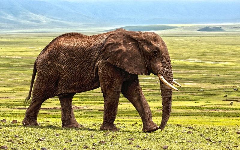 Divlje životinje - Slonovi