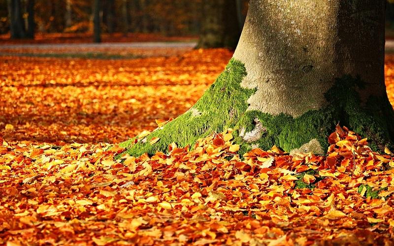 Godišnja doba - Jesen i opadanje lišća