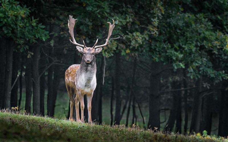 Fotografije životinja - jelen