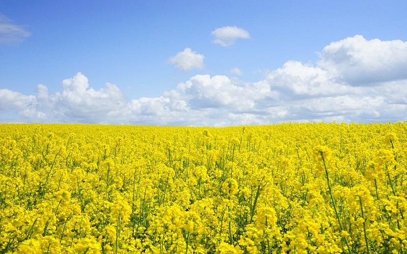 Godišnja doba - Proljeće i polje žutih cvjetova