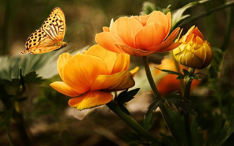 Cvijeće za vrt i ostalo cvijeće koje raste u prirodi