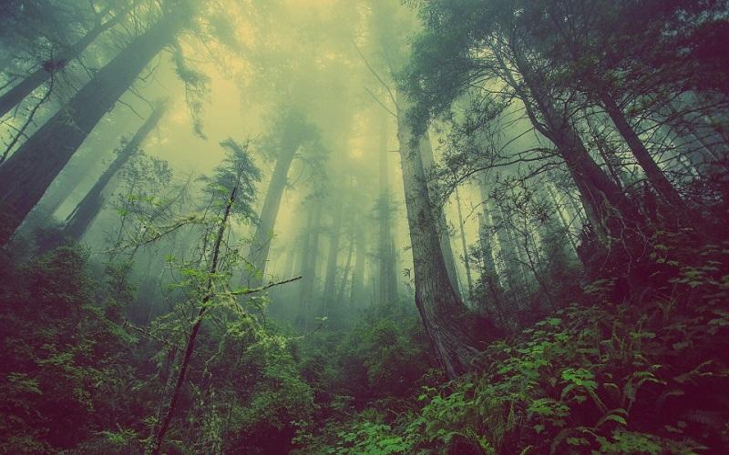 Jesen slike - Mistična šuma i magla
