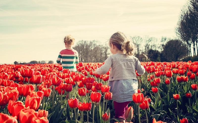 Godišnja doba - Proljeće i crveni tulipani
