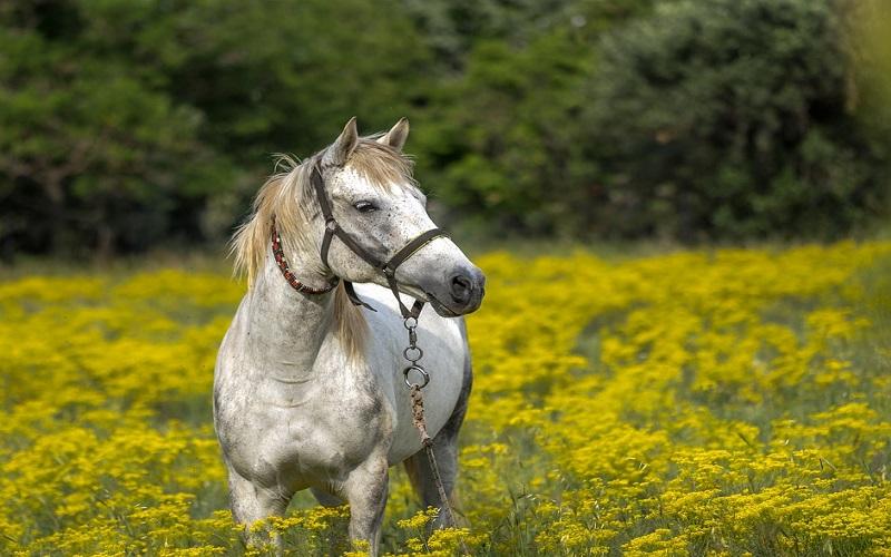 Slike prirode u proljeće - Konj na livadi