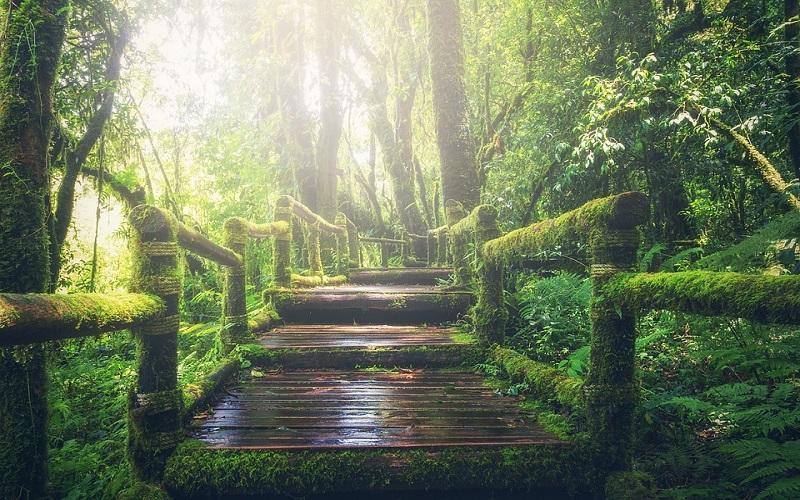 Najljepše fotografije - džungla
