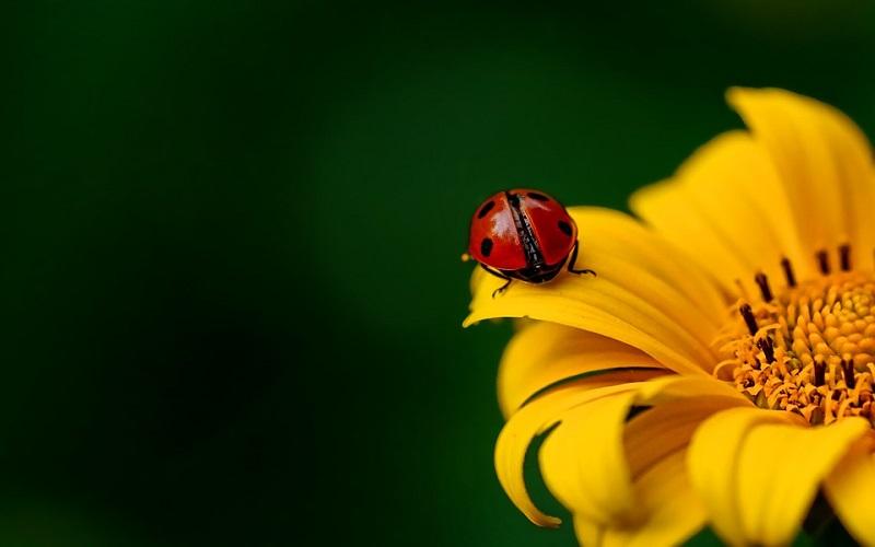 Proljeće u šumi, žuti cvijet i Buba Mara