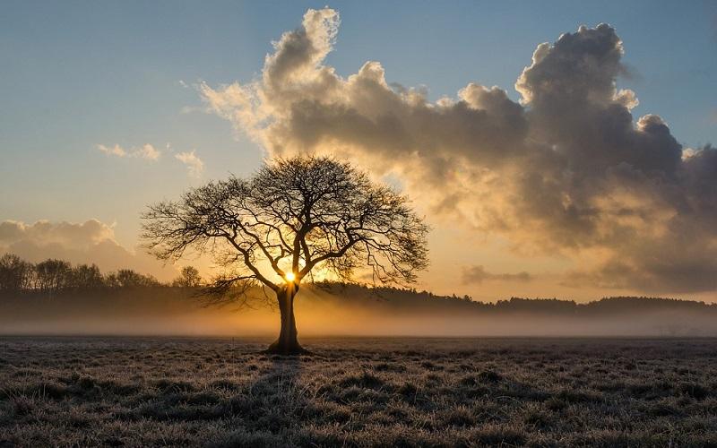 Fotografije sunca i drveća