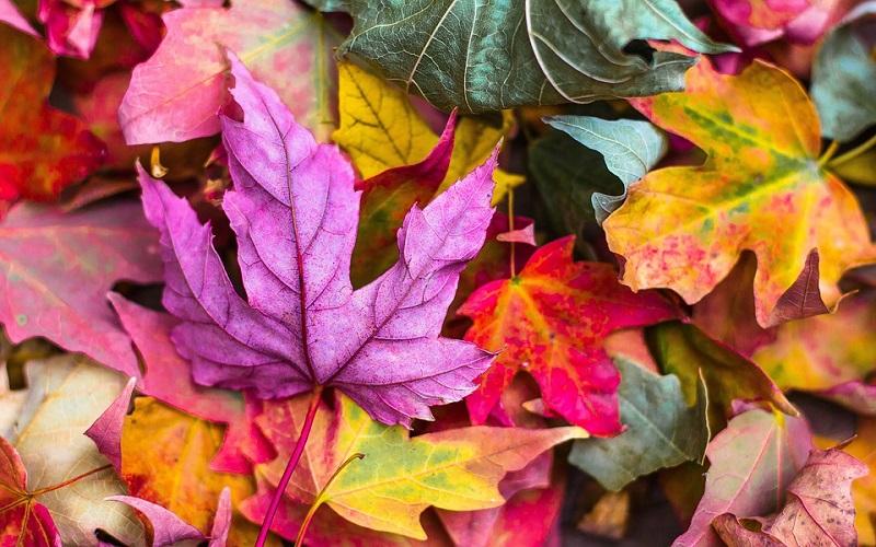 Jesen lišće lijepih boja