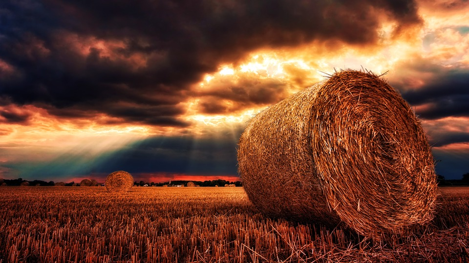Slike prirode - Polje na selu