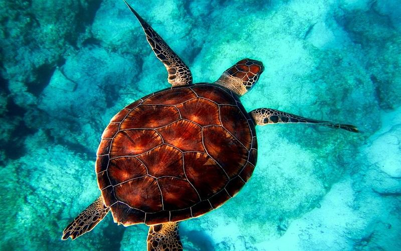 Slike za dobro jutro - kornjača