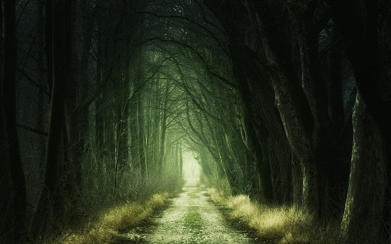 Fotografije šume - put kroz šumu