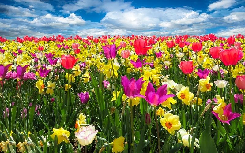 Buđenje proljeća i proljetno cvijeće