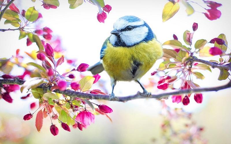 Lijepo proljeće i njegove boje