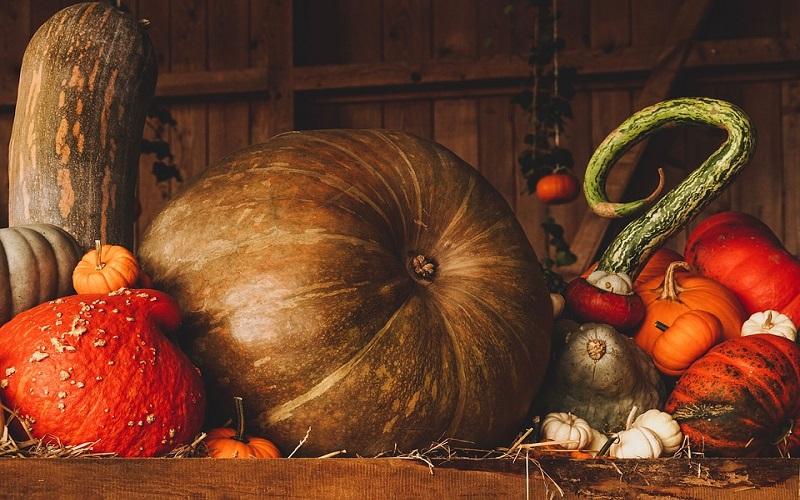 Fotografije povrća - bundeve
