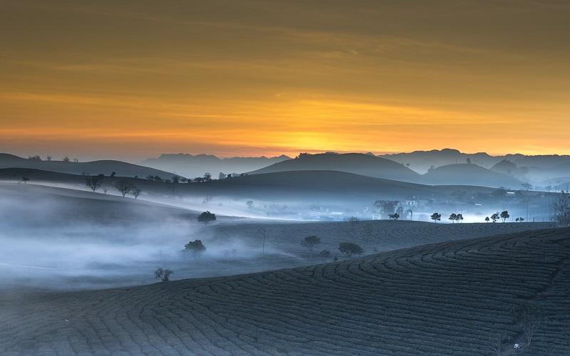 Slike prirode - čaj