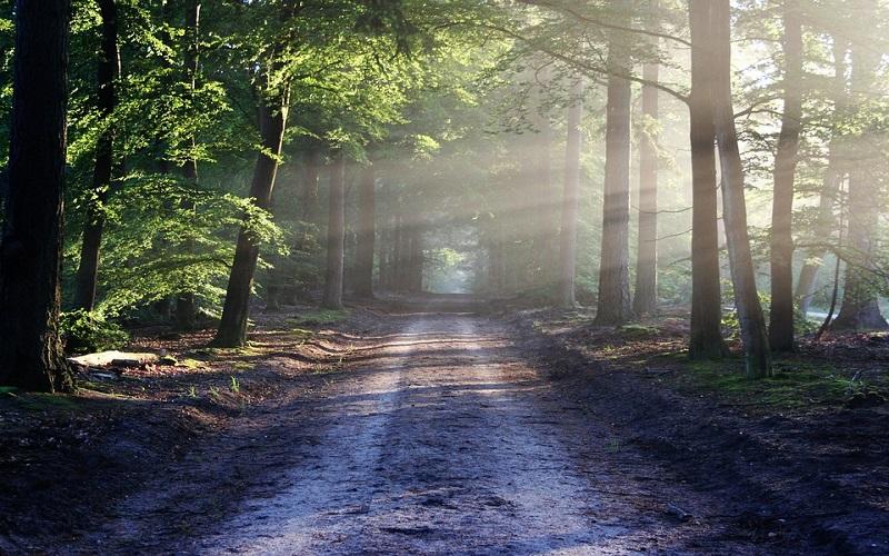Fotografije šume za opuštanje od stresa