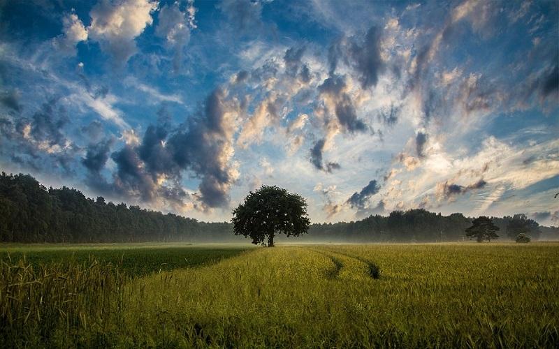 Najljepše slike prirode - polje pšenice