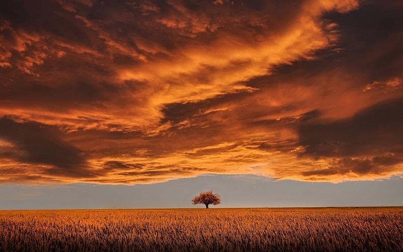 Slike za pozadinu - žitno polje