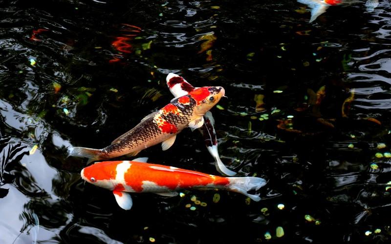 Slatkovodne ribe u rijekama i jezerima svijeta