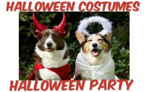 Smiješne slike pasa vezane za Halloween party
