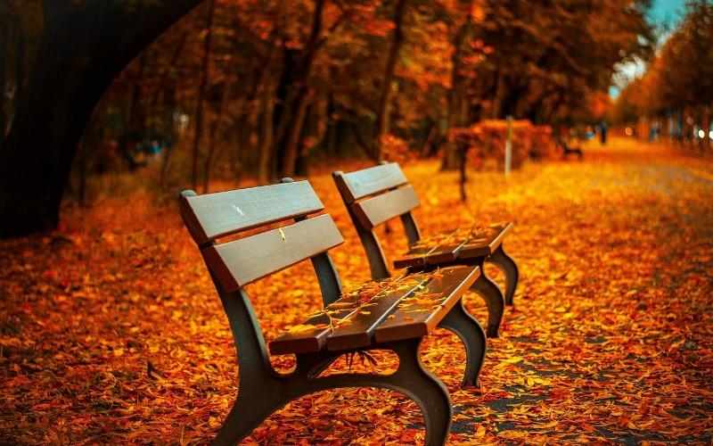 Slike Jeseni Cije Ce Vas Predivne Boje Dobro Opustiti Zabavni Net