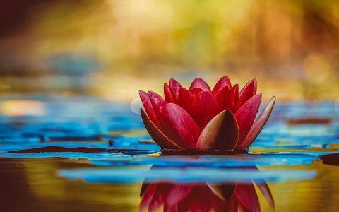 Slike cvijeća da bi se upravo vi bolje osjećali