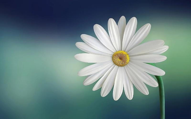 a single flowers