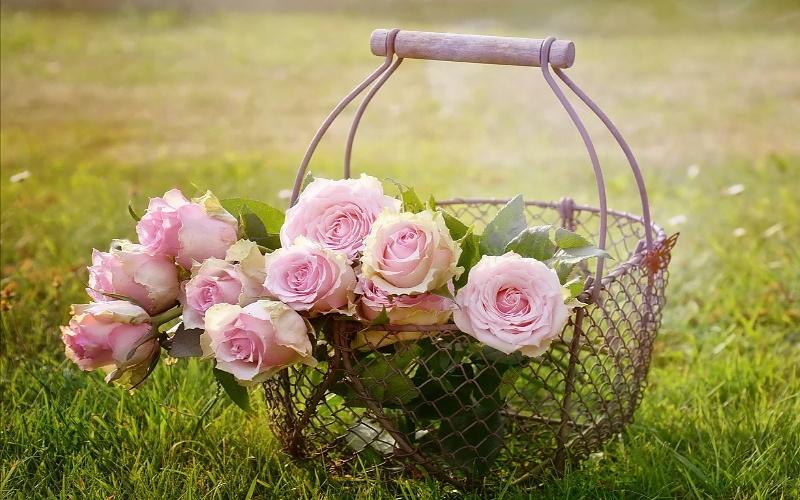 slike cvijeća za rođendan