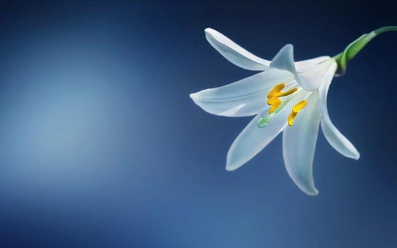 a wallpaper flowers