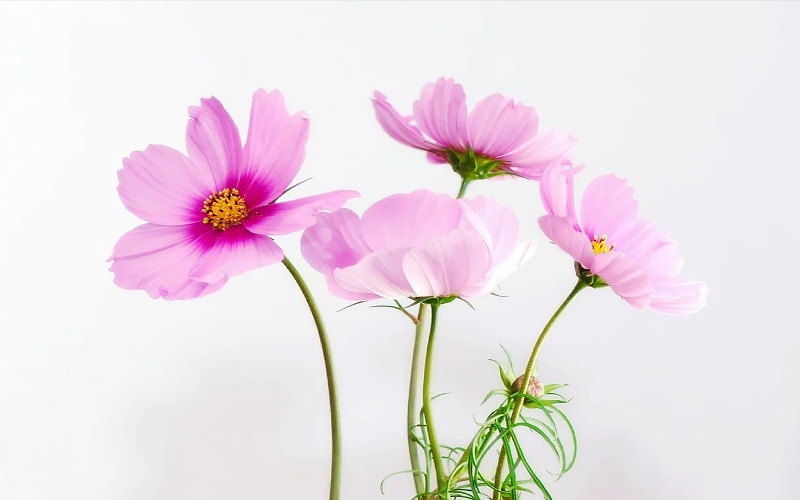 slike cvijeća za printanje
