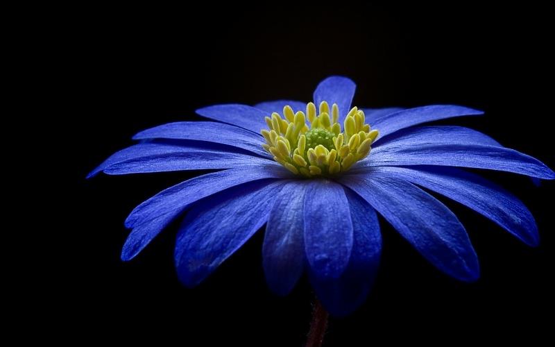 a beautiful flowers