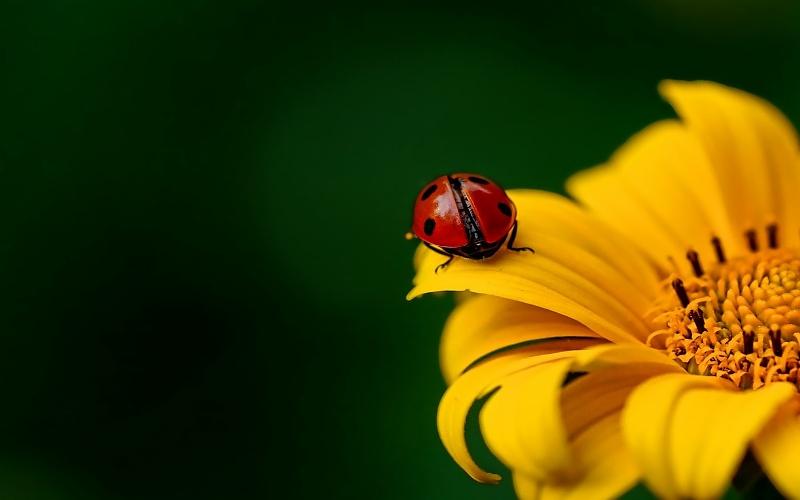 slike cvijeća u prirodi