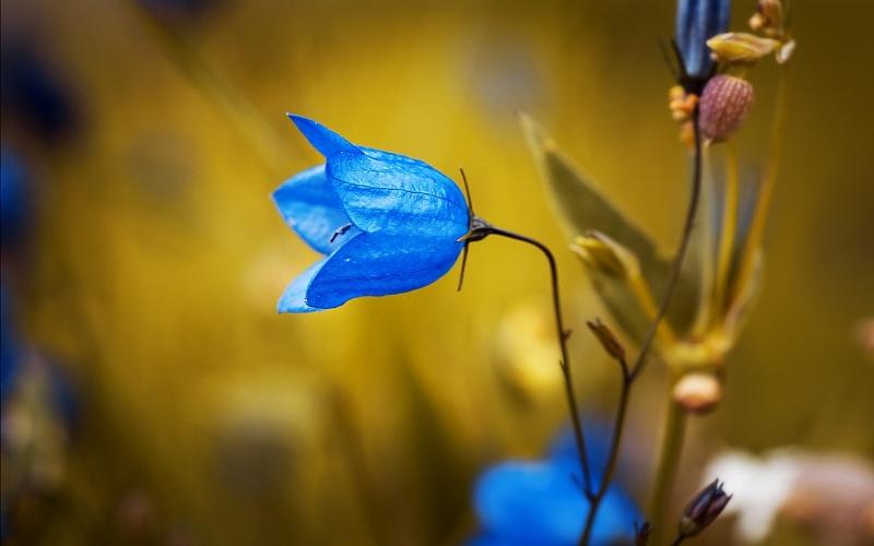 slike cvijeća i prirode