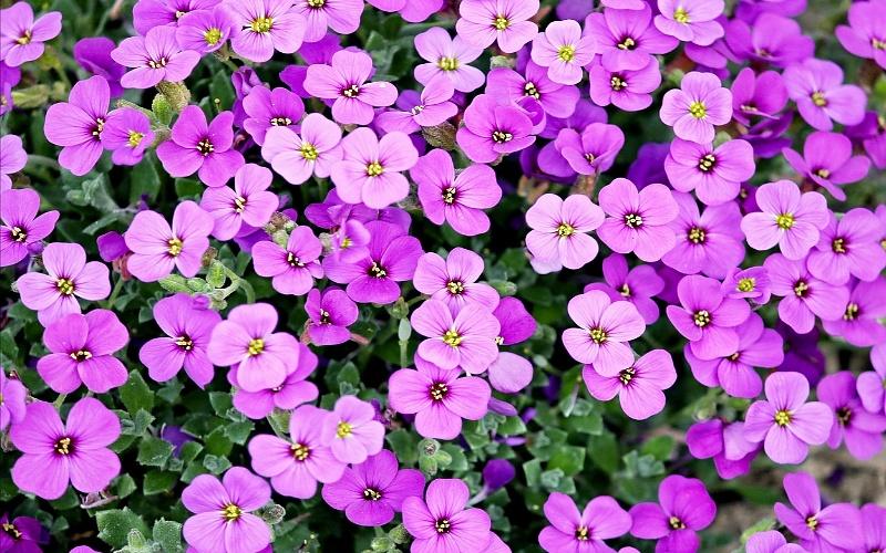 slike cvijeća za pozadinu