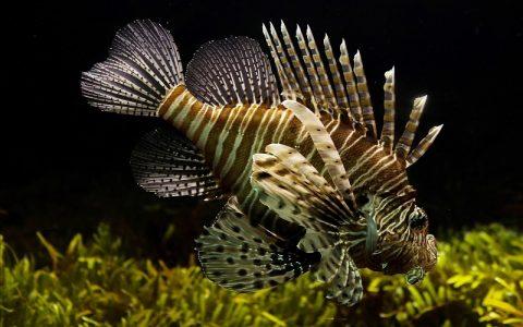 Akvarijske ribice koje će sigurno uljepšati vaš dom