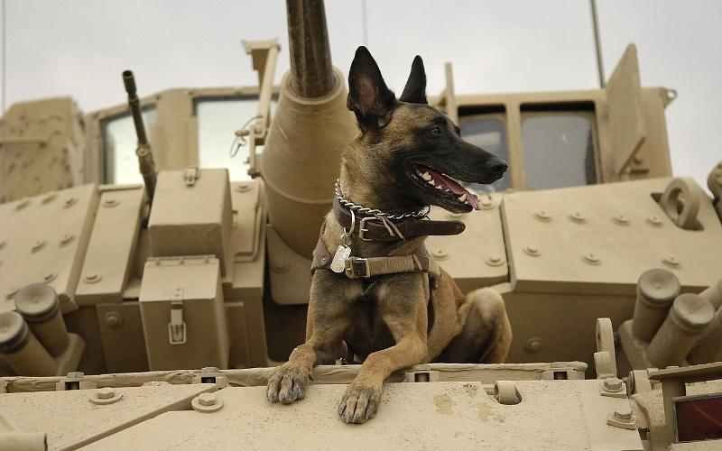 Vojni psi
