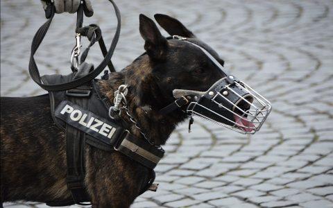 Policijski psi koji su stvarno uvijek zanimljivi