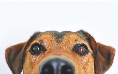 Psi mogu prepoznati je li netko dobra ili loša osoba