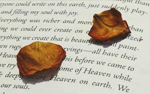 Citati Carla Gustava Junga koji će vas natjerati na razmišljanje