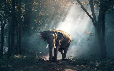 Značenje riječi Priroda: Šta znači taj pojam