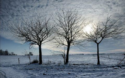Tri stabla: Priča koja će vas sigurno rasplakati